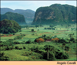 The scenic Viñales Valley, part of Cuba's Vuelta Abajo, where much fine tobacco is cultivated.