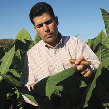 Jose Oliva examines a tobacco leaf.