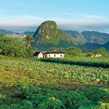 Not far west of Havana lies the Cuban province of Pinar del Río, home to some of the most fertile lands on earth and the world's greatest fields of premium cigar tobacco.